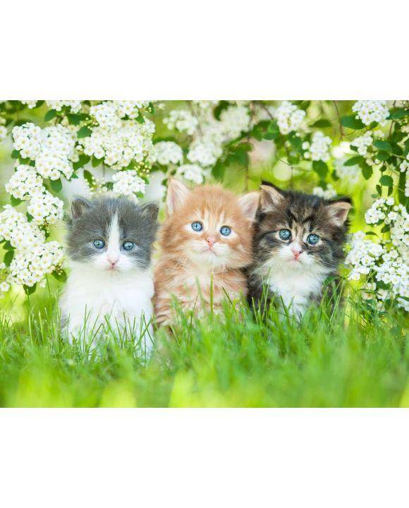 Lais Puzzle - Drei kleine Katzen sitzen nahe weißen Blumen - 500 & 1.000 Teile