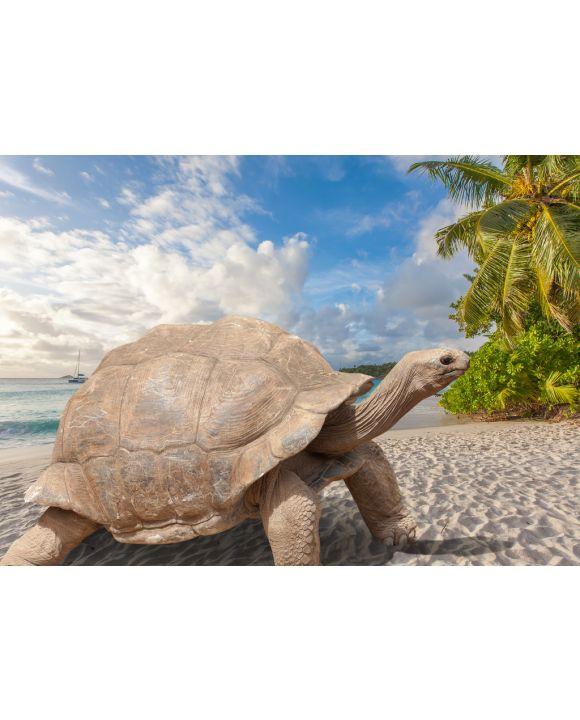 Lais Puzzle - Schildkröte am Strand, Seychellen - 100, 200, 500 & 1.000 Teile