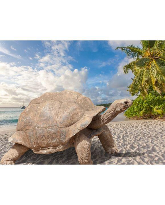 Lais Puzzle - Schildkröte am Strand, Seychellen - 500 & 1.000 Teile