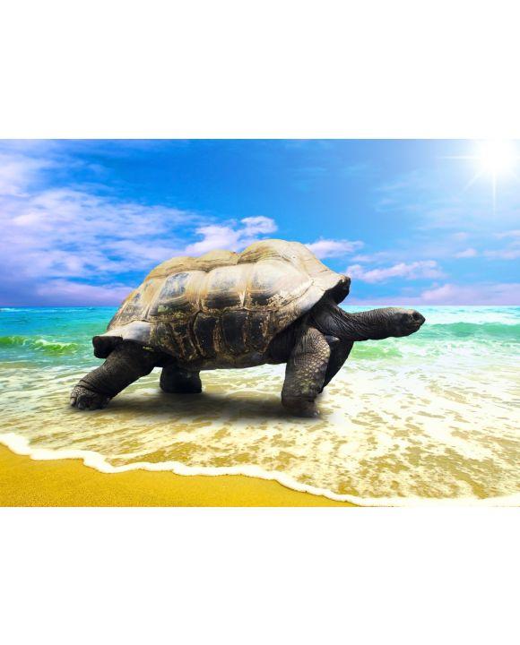 Lais Puzzle - große Schildkröte am Strand - 100, 200, 500 & 1.000 Teile
