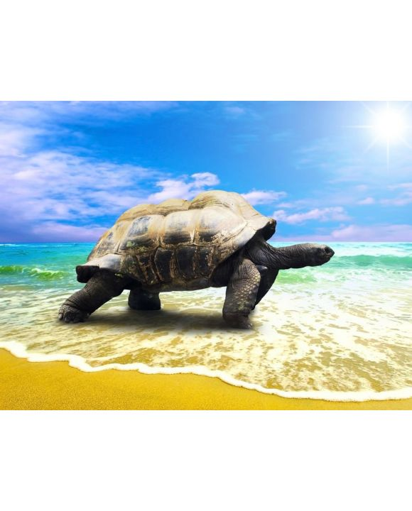 Lais Puzzle - große Schildkröte am Strand - 500 & 1.000 Teile