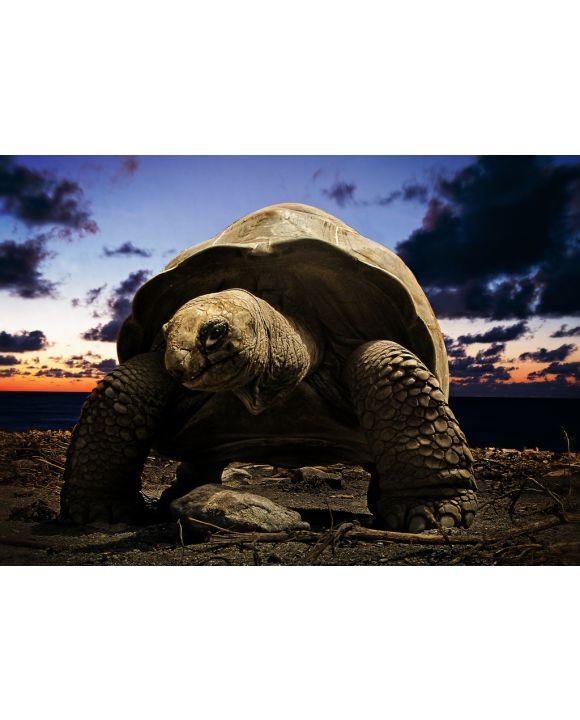 Lais Puzzle - große Schildkröte - 100, 200, 500 & 1.000 Teile