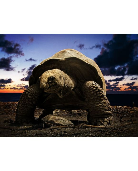 Lais Puzzle - große Schildkröte - 500 & 1.000 Teile