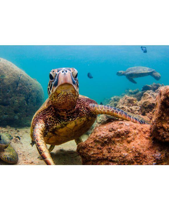 Lais Puzzle - Hawaiianische Meeresschildkröte - 100, 200, 500 & 1.000 Teile