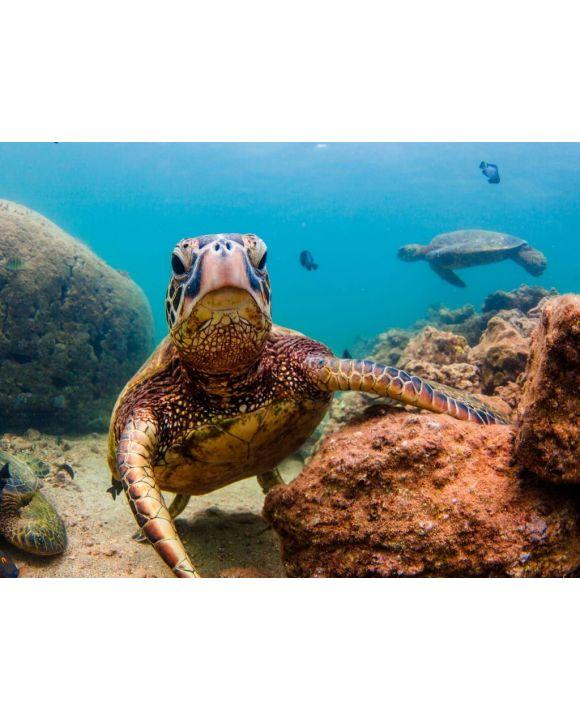 Lais Puzzle - Hawaiianische Meeresschildkröte - 100, 200, 500, 1.000 & 2.000 Teile