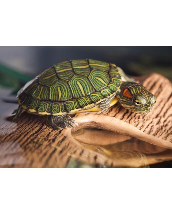 Lais Puzzle - Kleine Schildkröte auf braunem Stein - 100, 200, 500 & 1.000 Teile