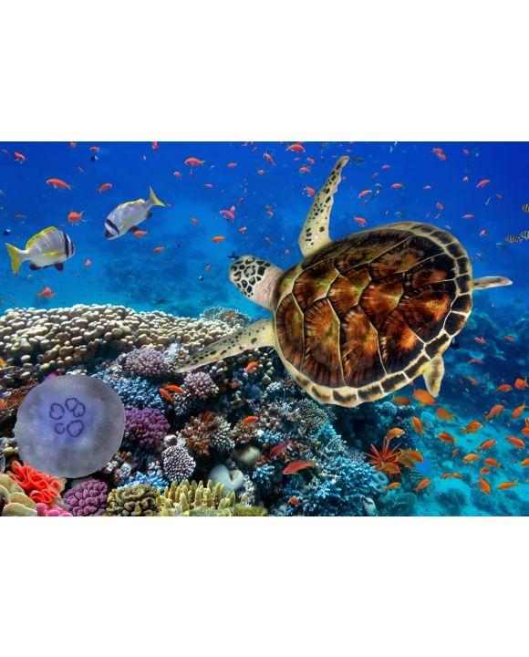 Lais Puzzle - Korallenriff mit Fischen und Wasserschildkröte - 100, 200, 500 & 1.000 Teile