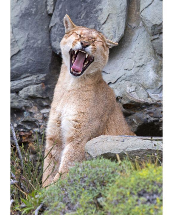 Lais Puzzle - Puma gähnt im Torres del Paine Nationalpark - 100, 200, 500 & 1.000 Teile