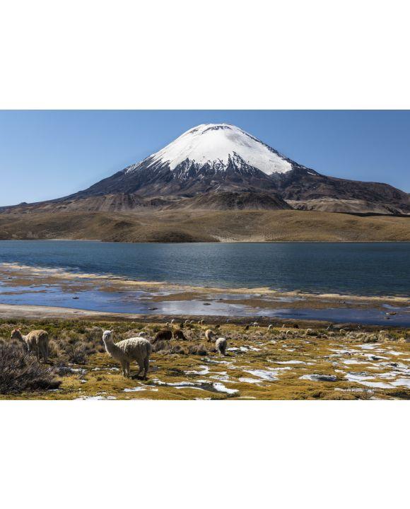 Lais Puzzle - Lama (Lama glama) vor dem Vulkan Parinacota, Höhe 6348 m, Chungar-See, Lauca-Nationalpark, Putre, Parinacota, Region Arica und Parinacota, Chile, Südamerika - 100, 200, 500 & 1.000 Teile