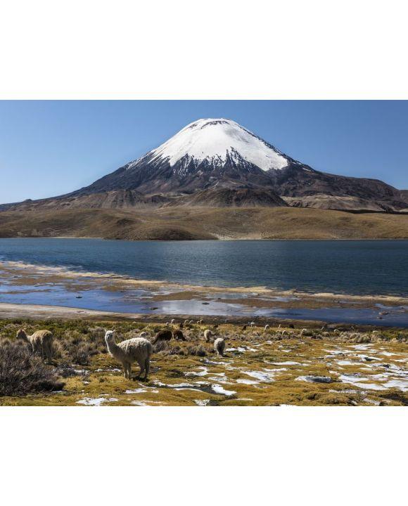 Lais Puzzle - Lama (Lama glama) vor dem Vulkan Parinacota, Höhe 6348 m, Chungar-See, Lauca-Nationalpark, Putre, Parinacota, Region Arica und Parinacota, Chile, Südamerika - 500 & 1.000 Teile