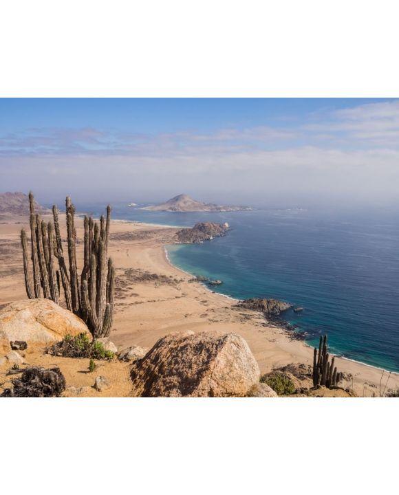 Lais Puzzle - Küste des Pan de Azucar Nationalparks in Chile. Atacama Wüstenküste und Kaktus - 100, 200, 500, 1.000 & 2.000 Teile