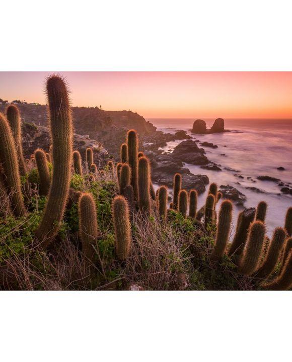 Lais Puzzle - Kaktus am Strand, Chile - 100, 200, 500, 1.000 & 2.000 Teile