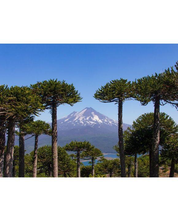Lais Puzzle - Vulkan Llaima, Chile - 100, 200, 500, 1.000 & 2.000 Teile