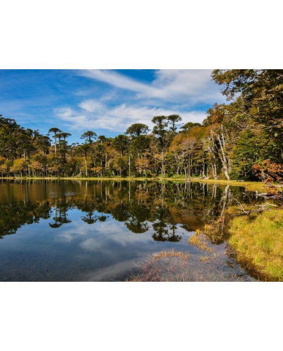 Lais Puzzle - Trekking in Reserva El Cani, in der Nähe von Pucon, Chile - 100, 200, 500, 1.000 & 2.000 Teile