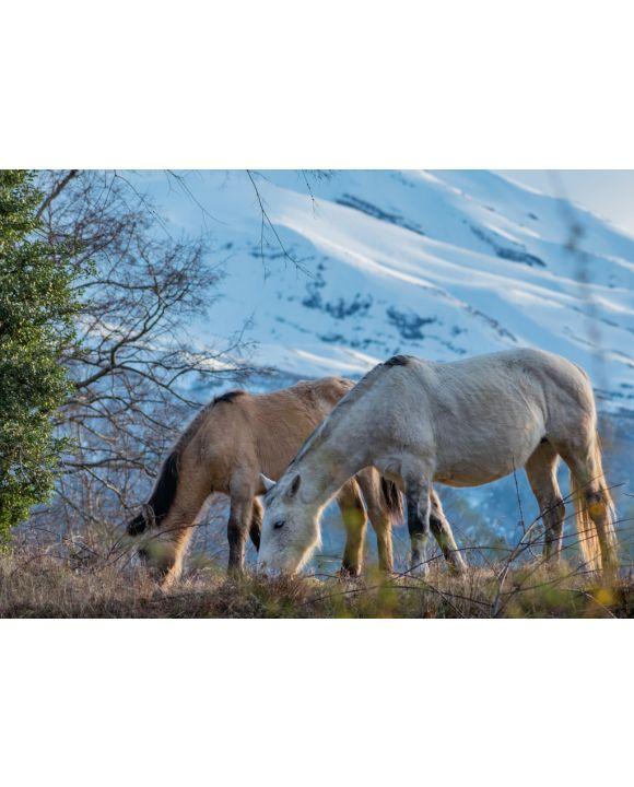 Lais Puzzle - Pferde im biologischen Reservat Huilo Huilo, Chile - 100, 200, 500 & 1.000 Teile