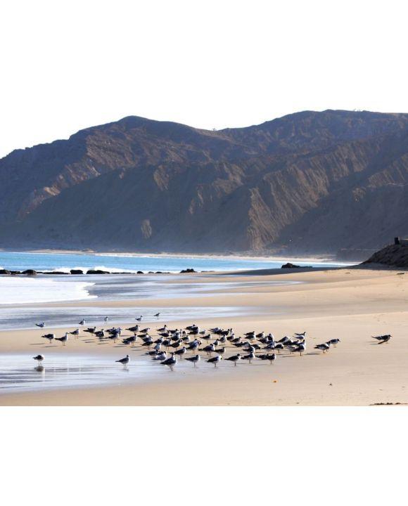 Lais Puzzle - Möwen rasten auf dem Sand am Strand von Cabo Blanco im Norden Perus - 500 & 1.000 Teile