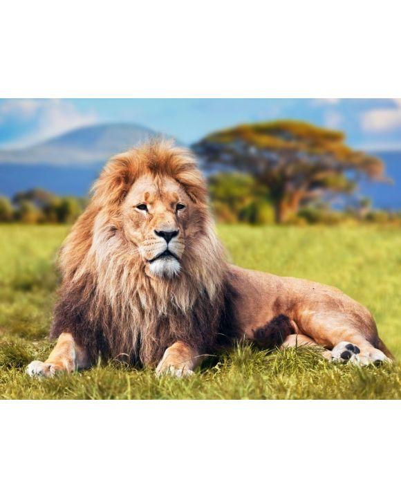 Lais Puzzle - Großer Löwe auf Savannengras liegend. Kenia, Afrika - 500 & 1.000 Teile