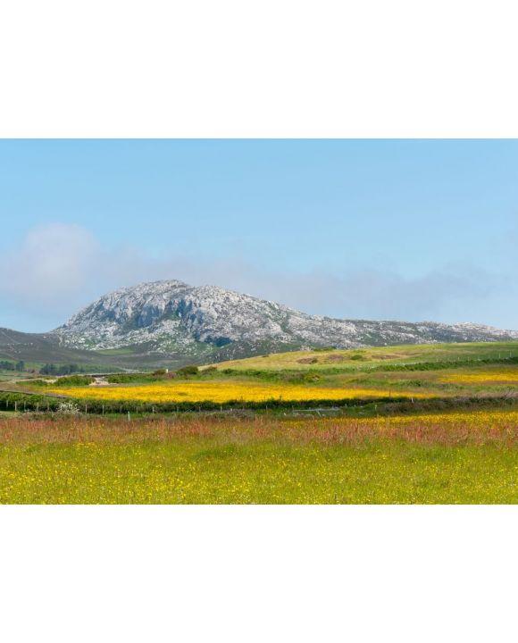 Lais Puzzle - Holyhead Mountain, (der walisische Name ist Mynydd Twr) über den Feldern mit Butterblumen und Wildblumen. In Holyhead Anglesey Nordwales - 500 & 1.000 Teile