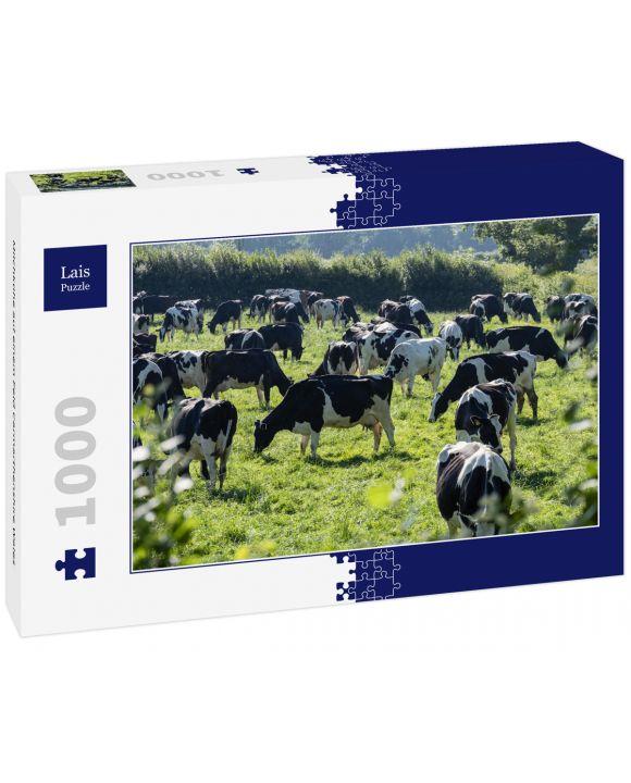 Lais Puzzle - Milchkühe auf einem Feld Carmarthenshire Wales - 1.000 Teile