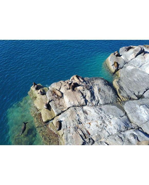 Lais Puzzle - Seelöwen auf der Insel Coronado - 500 & 1.000 Teile