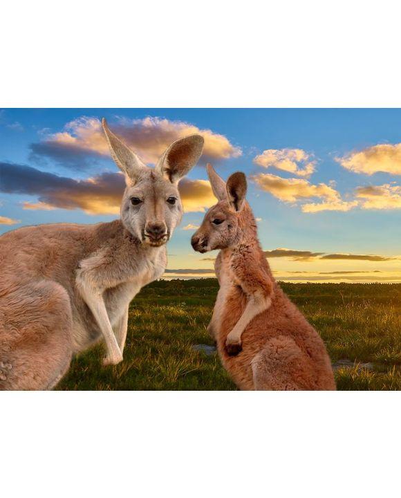 Lais Puzzle - Kängurus im Outback im Sonnenuntergang, Australien - 500 & 1.000 Teile