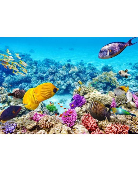 Lais Puzzle - Unterwasserwelt mit Korallen und tropischen Fischen, Queensland, Australien - 500 & 1.000 Teile