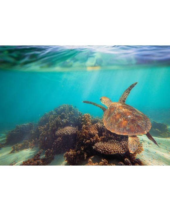 Lais Puzzle - Schildkröte schwimmt unter Wasser am Ningaloo Riff, Westaustralien - 500 & 1.000 Teile