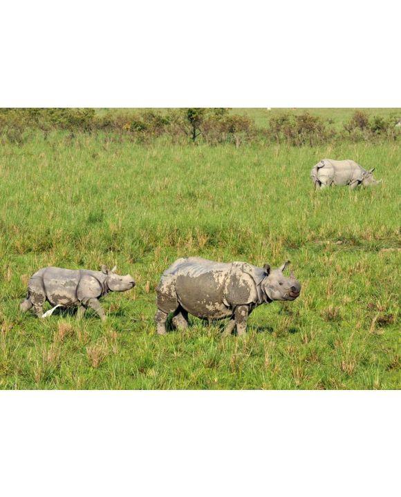 Lais Puzzle - Ein gehörntes Nashorn auf der Wiese des Pobitora Wildlife Sanctuary, Indien - 500 & 1.000 Teile