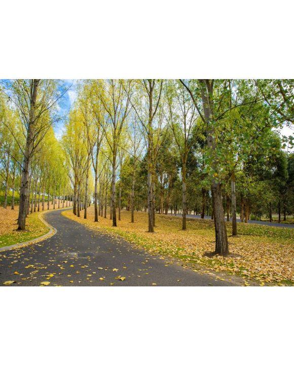Lais Puzzle - Englische Bäume und Boden mit Herbstlaub bedeckt, Yarra Valley, Tarrawarra, Melbourne, Australien - 500 & 1.000 Teile