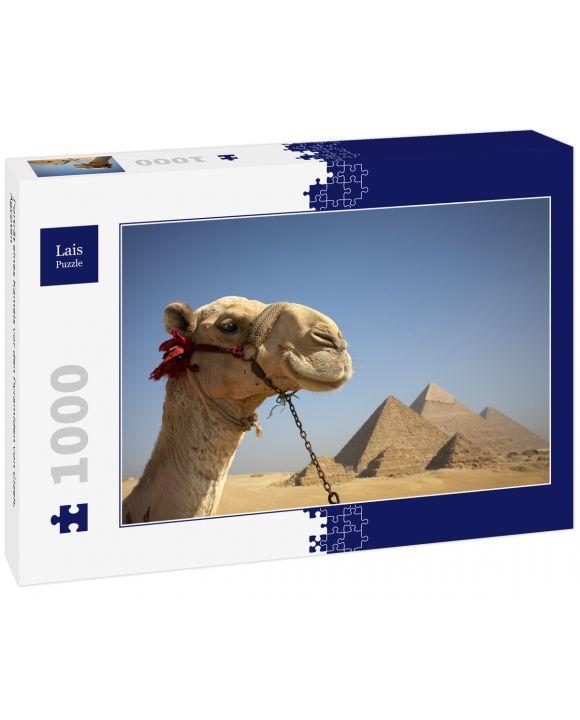 Lais Puzzle - Porträt eines Kamels vor den Pyramiden von Gizeh, Ägypten - 1.000 Teile