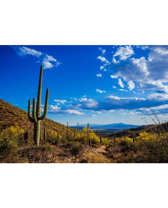 Lais Puzzle - Saguaro-Ansicht, Mexiko  - 500 & 1.000 Teile