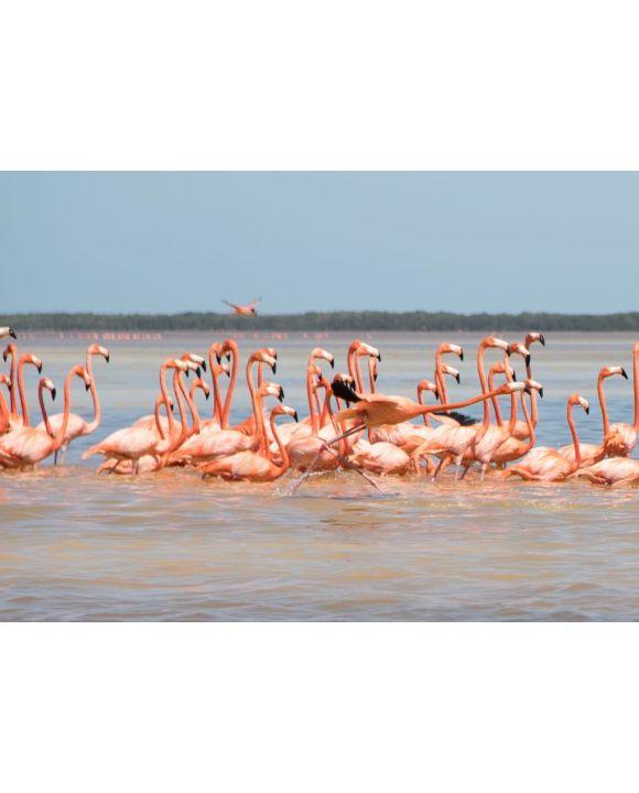 Lais Puzzle - Flamingos, Vögel, Celestun, Wasser, Yucatan, Mexiko - 500 & 1.000 Teile