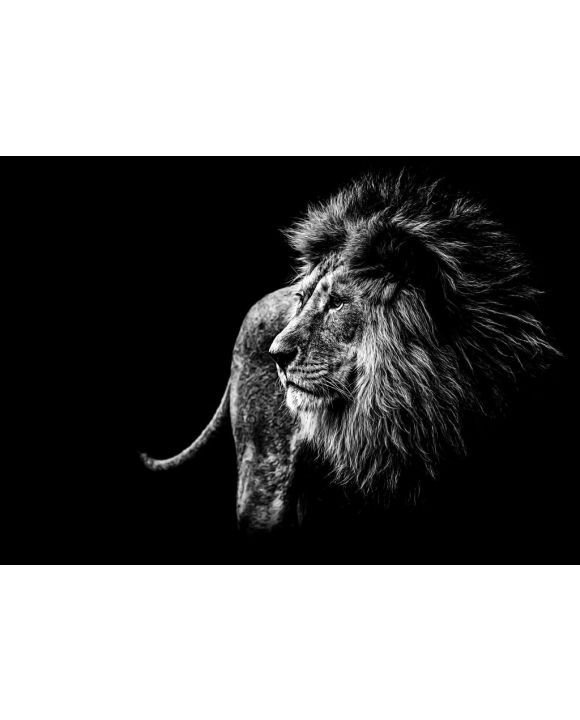 Lais Puzzle - Löwe in schwarz und weiß - 500 & 1.000 Teile