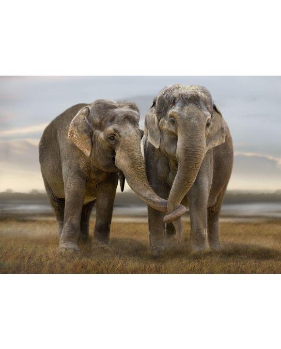 Lais Puzzle - Elefanten - 500 & 1.000 Teile