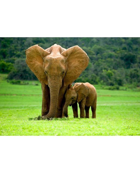 Lais Puzzle - Elefantenmutter mit Jungtier - 500 & 1.000 Teile