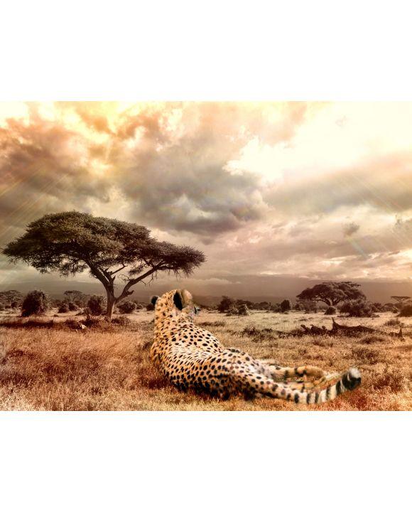 Lais Puzzle - Gepard - 1.000 & 2.000 Teile