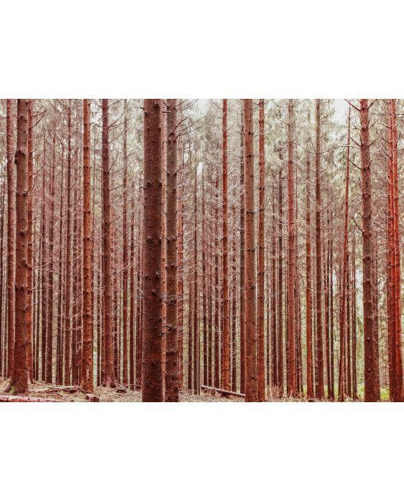 Lais Puzzle - Wald im Herbst - 1.000 Teile
