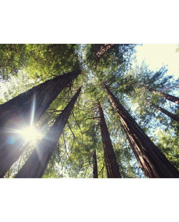 Lais Puzzle - Bäume von unten - 2.000 Teile