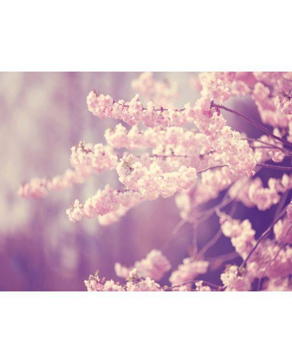 Lais Puzzle - Rosa Blüten - 1.000 & 2.000 Teile