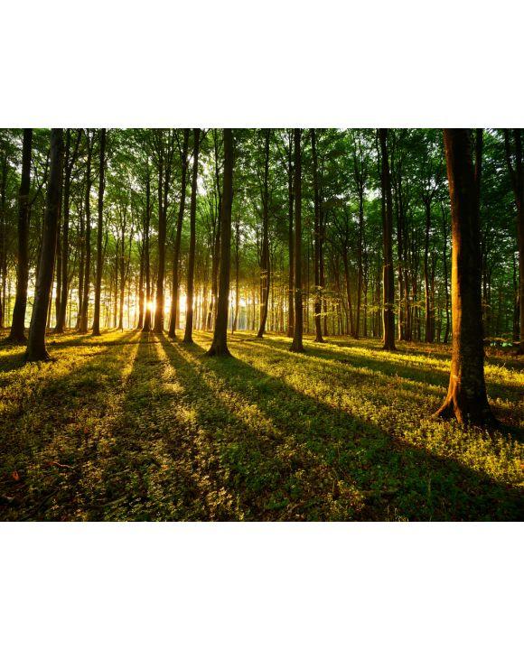 Lais Puzzle - Lichtstrahlen im Wald - 200, 500 & 1.000 Teile
