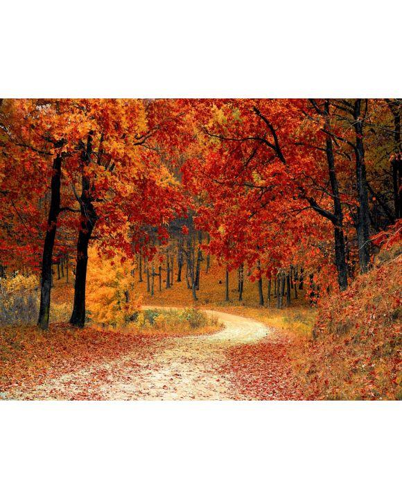 Lais Puzzle - Herbstlicher Wald - 2.000 Teile