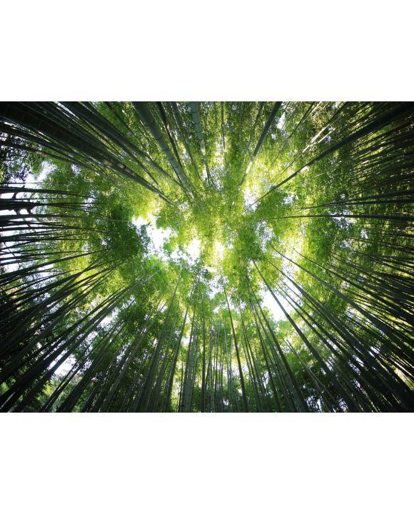 Lais Puzzle - Bäume von unten - 1.000 & 2.000 Teile