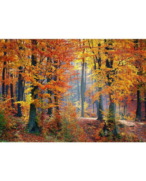 Lais Puzzle - Waldlandschaft im Herbst - 1.000 Teile