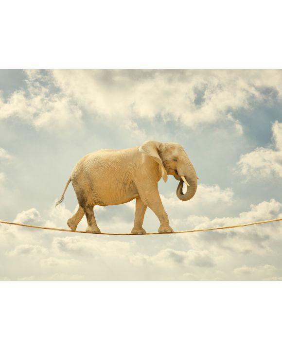 Lais Puzzle - Elefant auf Seil - 500 & 1.000 Teile