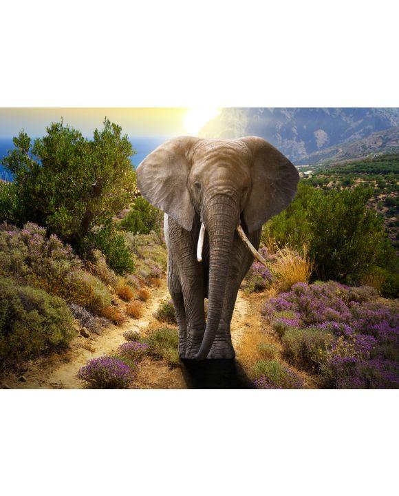 Lais Puzzle - Elefant - 200, 500 & 1.000 Teile