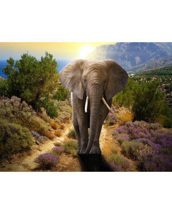 Lais Puzzle - Elefant - 500 & 1.000 Teile