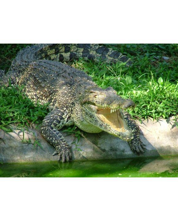 Lais Puzzle - Krokodil - 500 Teile