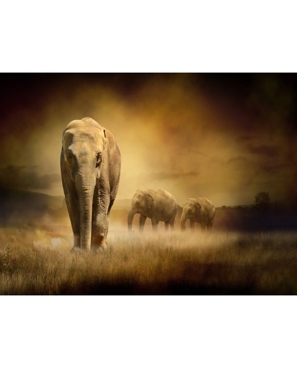 Lais Puzzle - Elefanten im Sonnenuntergang - 1.000 Teile