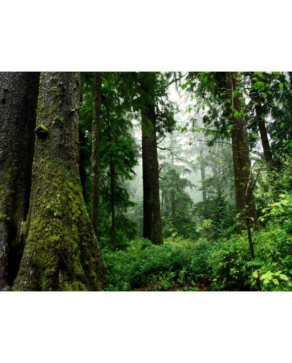 Lais Puzzle - Wald - 1.000 Teile