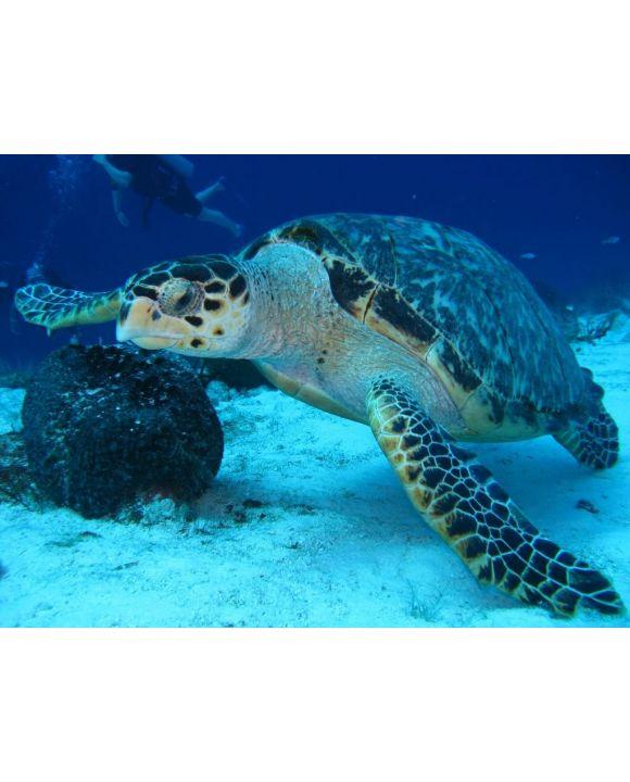 Lais Puzzle - Meeresschildkröte - 100, 200, 500, 1.000 & 2.000 Teile